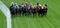 flat-horse-racing