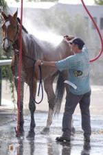 tratador-cavalos